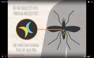 MalariaGEN animation about malaria drug resistance and genomics.