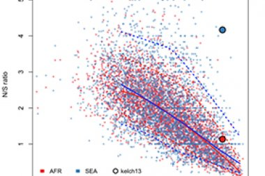 Genome-wide analysis of N/S ratio. For each P. falciparum gene the N/S ratio in Africa (red points) and in SEA (blue points) are plotted against the conservation score of the gene coding sequence. The kelch13 gene values are represented by larger circles. Photo credit: DOI: 10.7554/eLife.08714