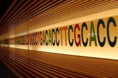 DNA Photo credit: Miki Yoshihito, Flickr 2008, CC-BY 2.0.